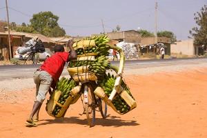 man pushing bike carrying way too much fruit