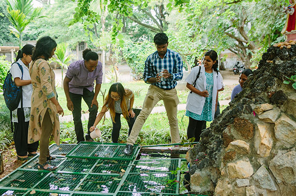 """Subin Jang (fourth from left) works with other St. John's Medical College students and SPH student Patrick Williams (third from left) to catch fish using mosquito larva. """"Dengue fever is mosquito borne and a big problem in India, so we were looking at how fish eat the larva to manage the population,"""" says Jang."""