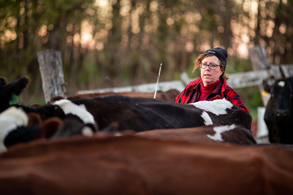 woman and her cows
