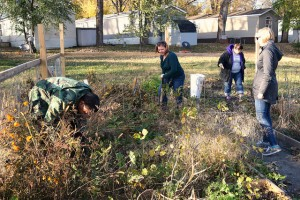 Carver County Health Specialist Tami LaGow and UMN School of Public Health student Sam Rosner help Riverview Terrace residents prepare their gardens for winter. The public health department piloted a community garden initiative in the mobile home park this year.